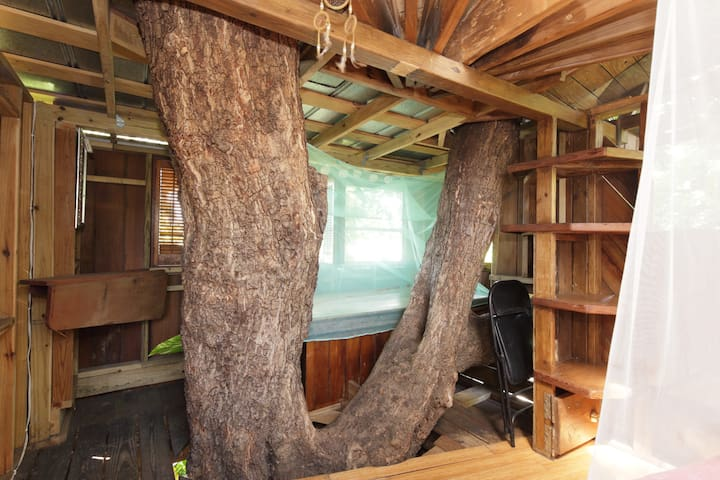 Pithecillobeum tree in your room!
