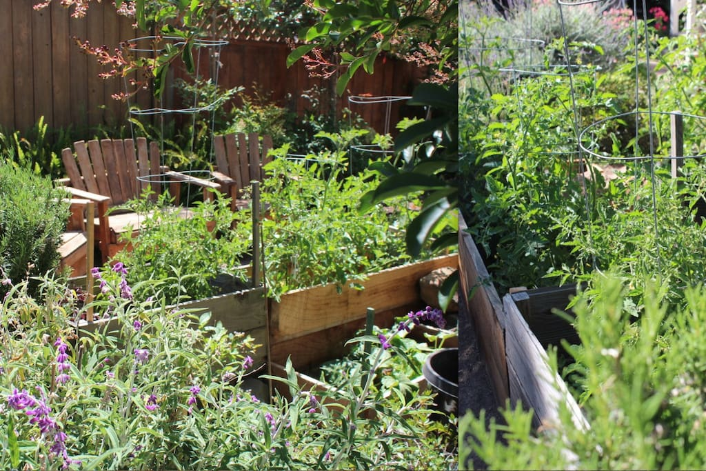 I love to grow an edible garden with seasonal selection for guests to enjoy.