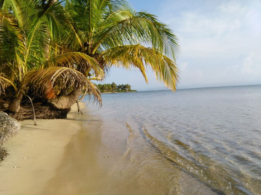 bocas del toro buddhist singles Try our costa rica and panama tour to discover interesting and iconic singles short haul bid panama farewell as you transfer from bocas del toro by.