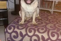 minha cachorrinha  Anastácia