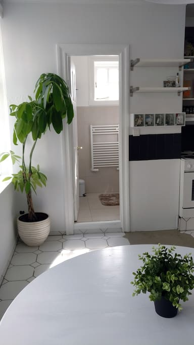 Bathroom entrance, and my lovely plant.