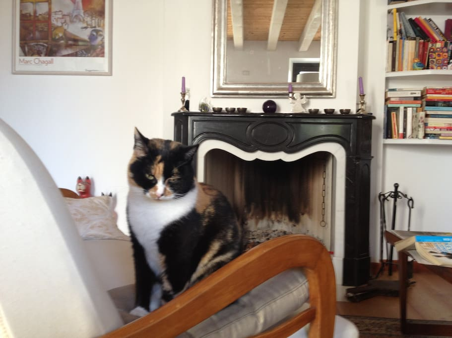 the living room with fireplace (cat not included)