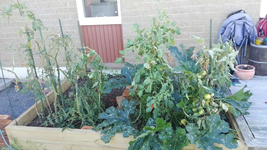 We're learning how to garden veges - if you have any tips we'd love to hear them!