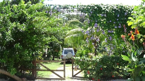 Town Center Private Apt., see Jungle, hear Surf,