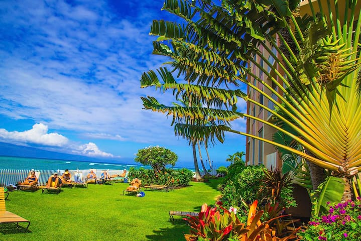WEST MAUI DIRECT OCEAN FRONT STUDIO - Lahaina - Kondominium