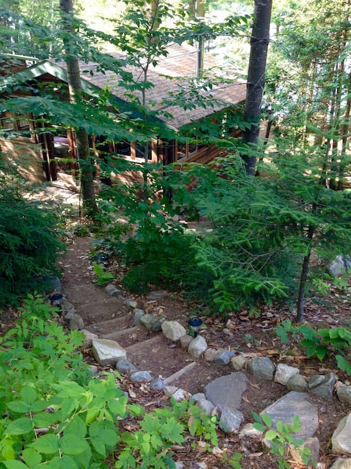 The steps down to your cabin amongst the trees...