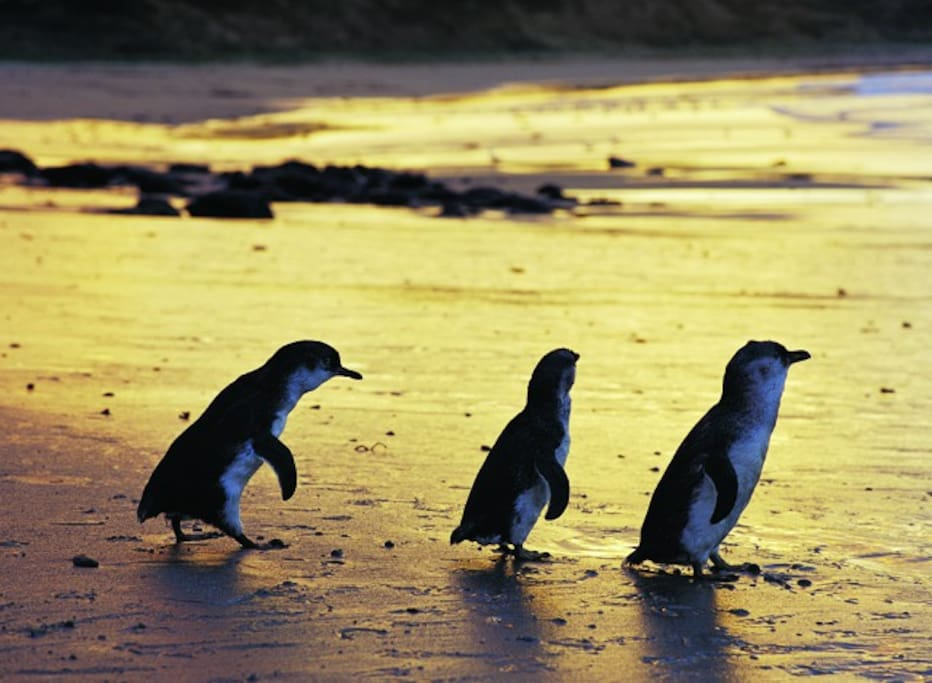 Airbnb Phillip Island Victoria