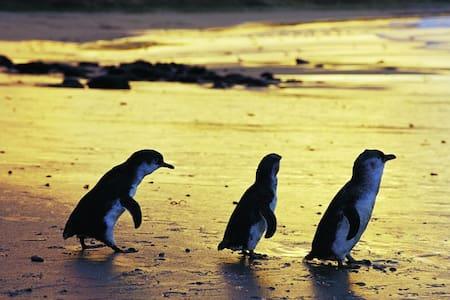 Phillip Island Bass Coast Victoria - Wonthaggi - ที่พักพร้อมอาหารเช้า