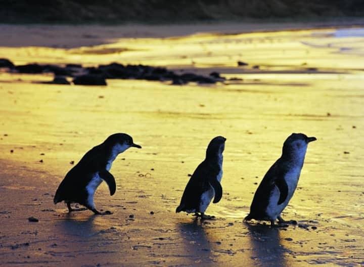 Phillip Island Bass Coast Victoria