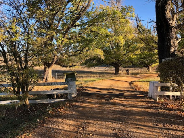 "The entrance to ""Cedar Lodge"""