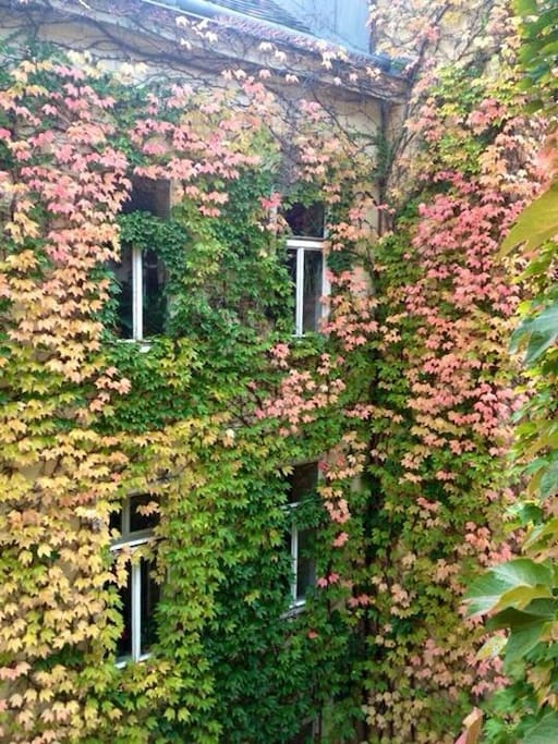 Our courtyard in autumn!