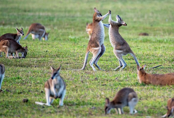 45 minutes by car: The  Healesville Sanctuary is World renowned for viewing Australian wildlife in its natural habitat. Be sure to make a day of this!