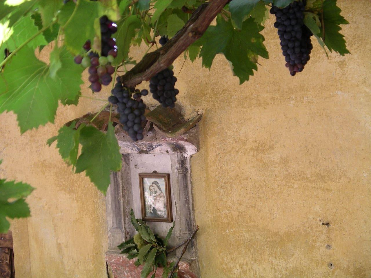 The vine-covered pergola
