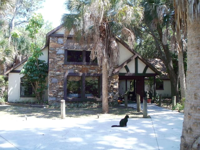 Florida's Gulf Coast Jungle Setting