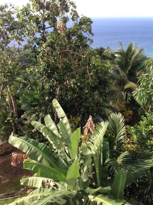 Tropical gardens...