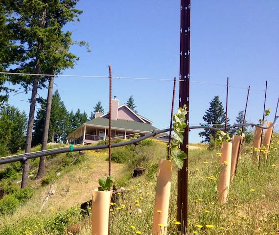 Terragena Vineyard - Retreat near the Redwoods - Myers Flat - Huis