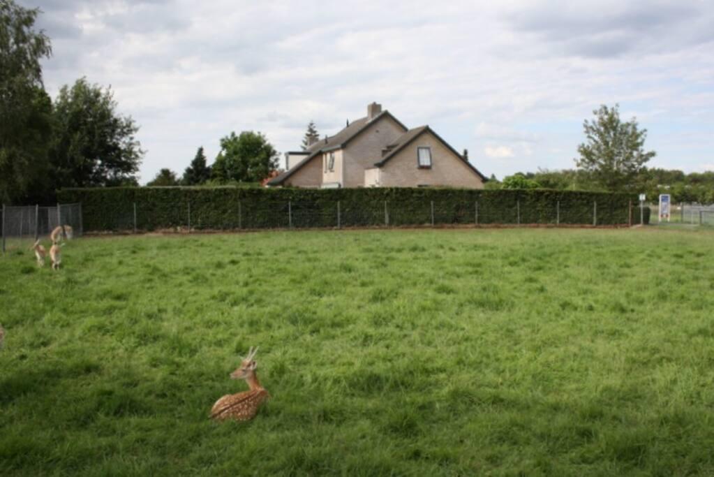 the neighbours livestock