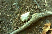 This is the second arrowhead found recently.  This one was right on the trail to the cabin.
