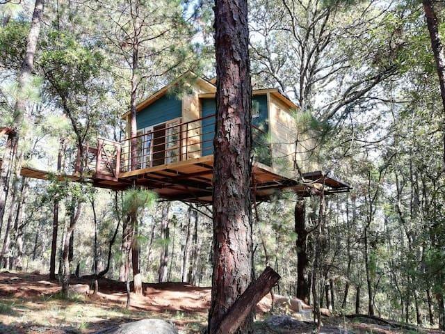 Hermosa casita en el árbol