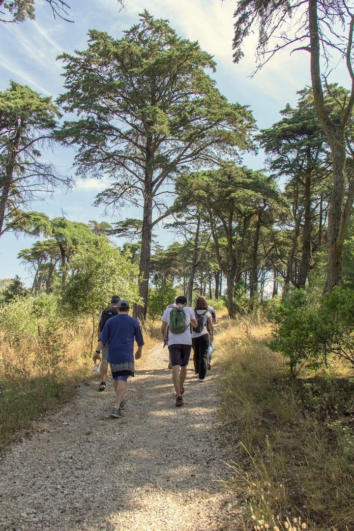 Walking in Monsanto Forest