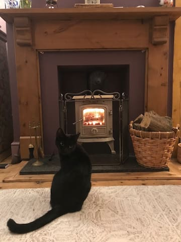Cosy Wood burner and Finlay!