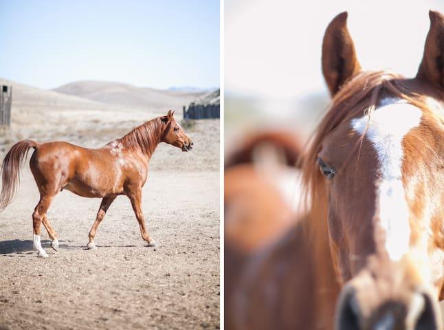 Arabians next door