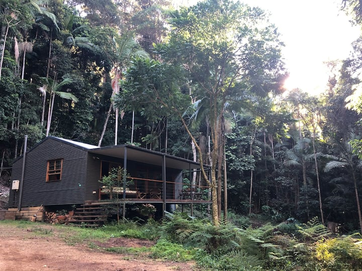 Cabin McCabin Face in Secluded Rainforest