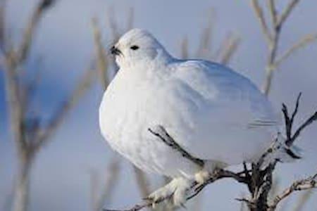 The Ptarmigans Nest, Birds Nest  , No Cleaning Fee - Silverthorne