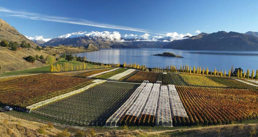 Rippon Vineyard & Winery homestead - Wanaka - Bed & Breakfast