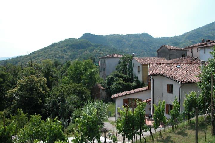Inside Tuscany dream Cardoso holiday .
