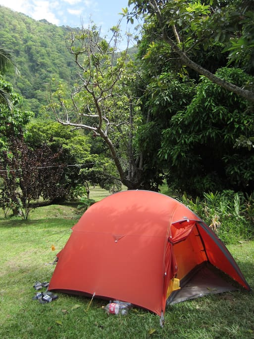 A pitched tent in Big Banana Campground