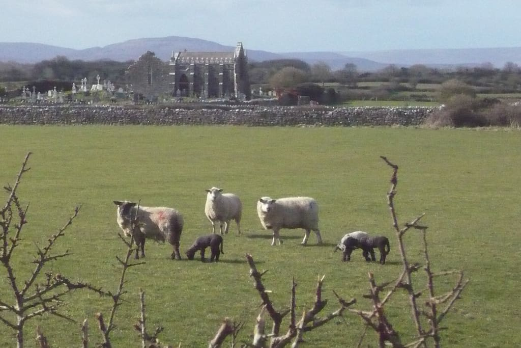 It's lambing time  2016! View from the front garden.