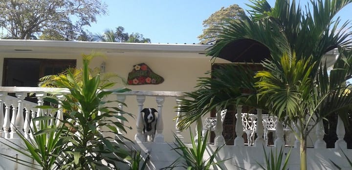 Hibiscus House Bed and Breakfast