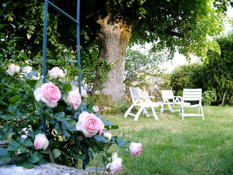 Lime tree and roses in the month of mai