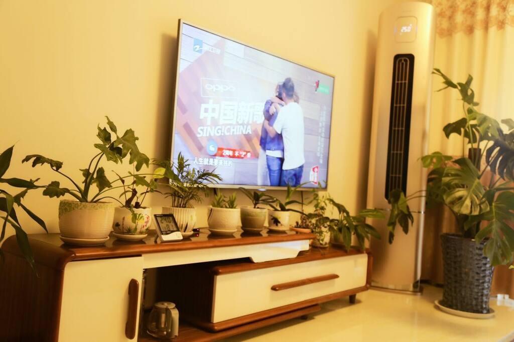 客厅(电视,空调,绿植)