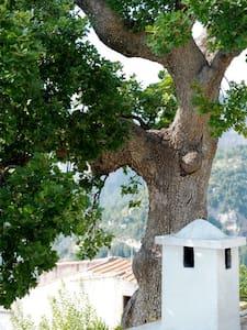Amalfi Coast Rental Villa Partenope - Nocelle