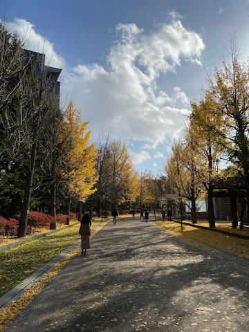 10min walk to Nakajima park 中島公園まで徒歩10分