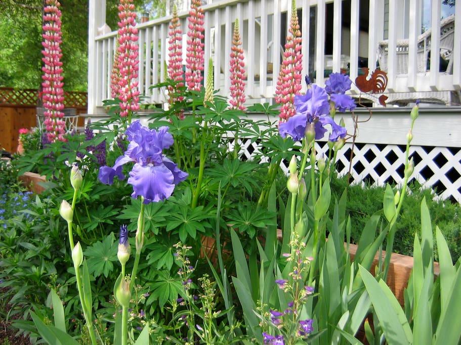 Priscilla's garden