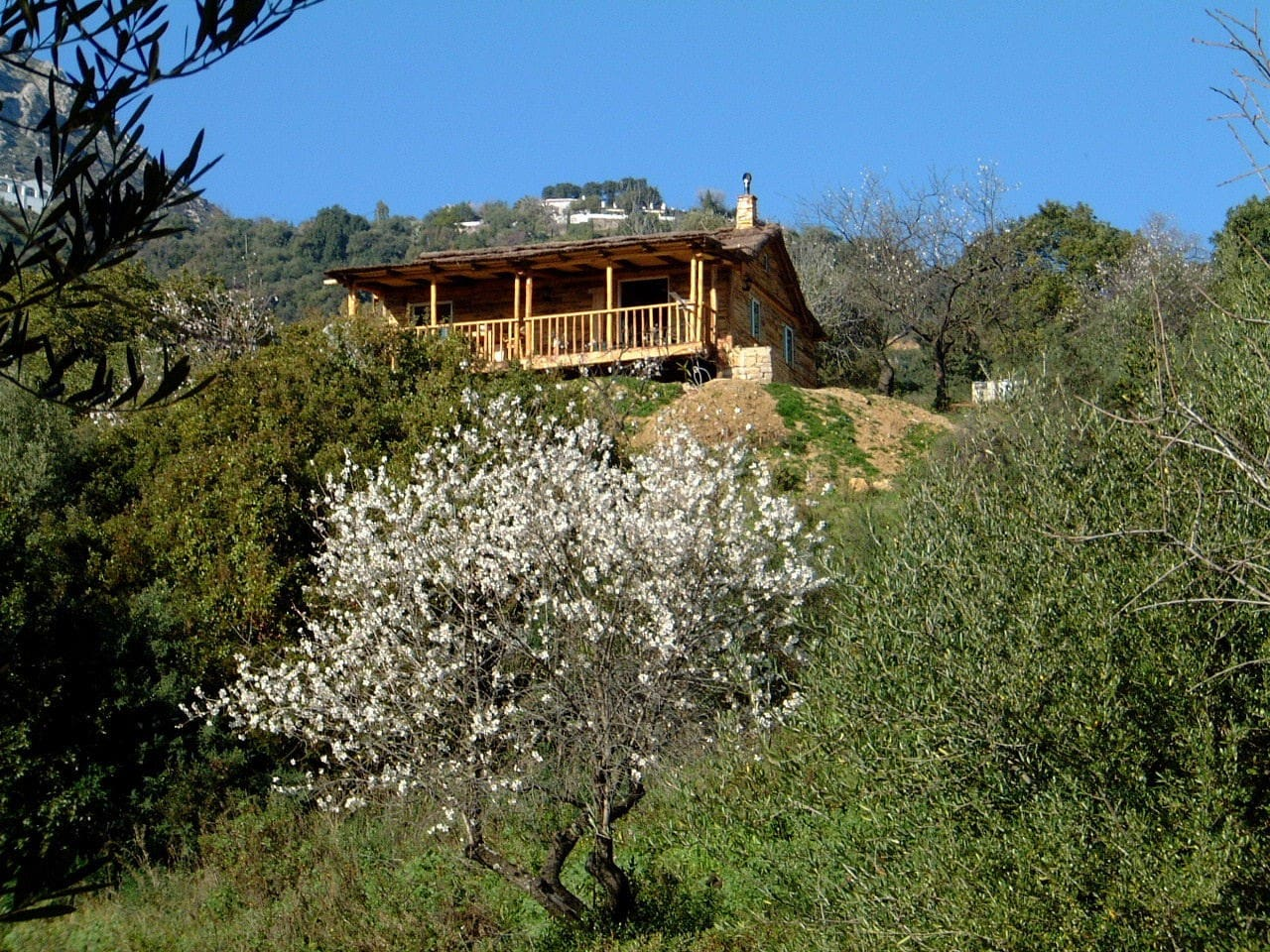 View of La Chozita with flowering almond tree in winter