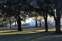 Plenty of live oak trees