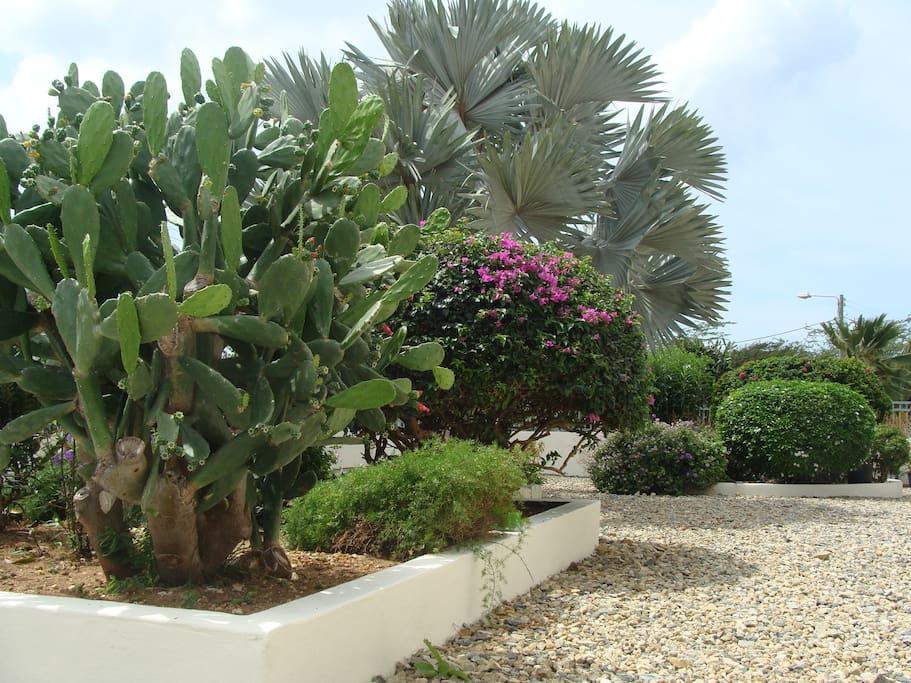 Tropische tuin geheel ommuurd met parkeergelegenheid.