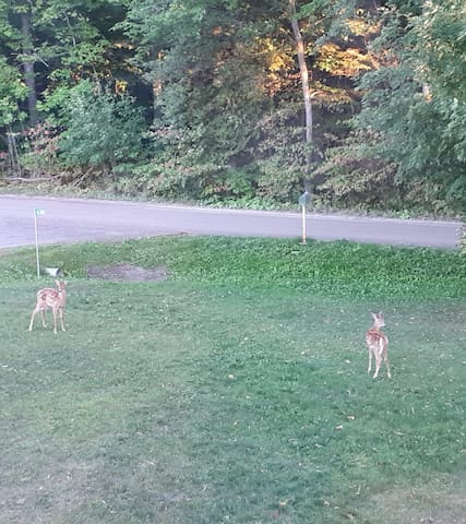Wildlife in front yard.