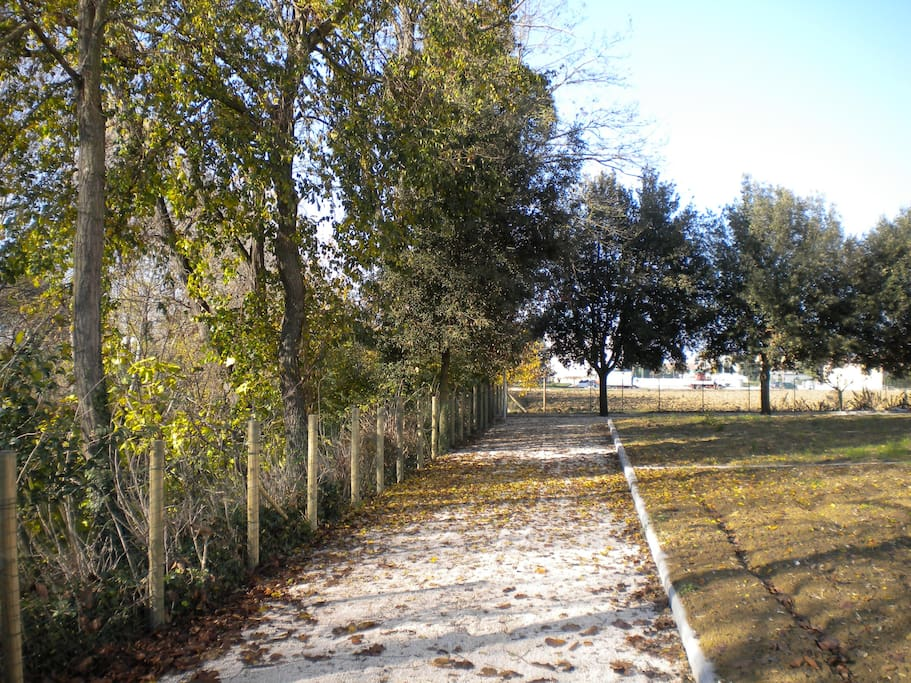 Viale d'autunno del casolare