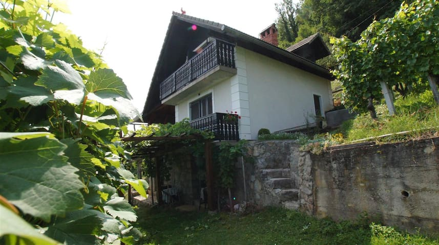 Vineyard cottage Zajc - Semič - Hus