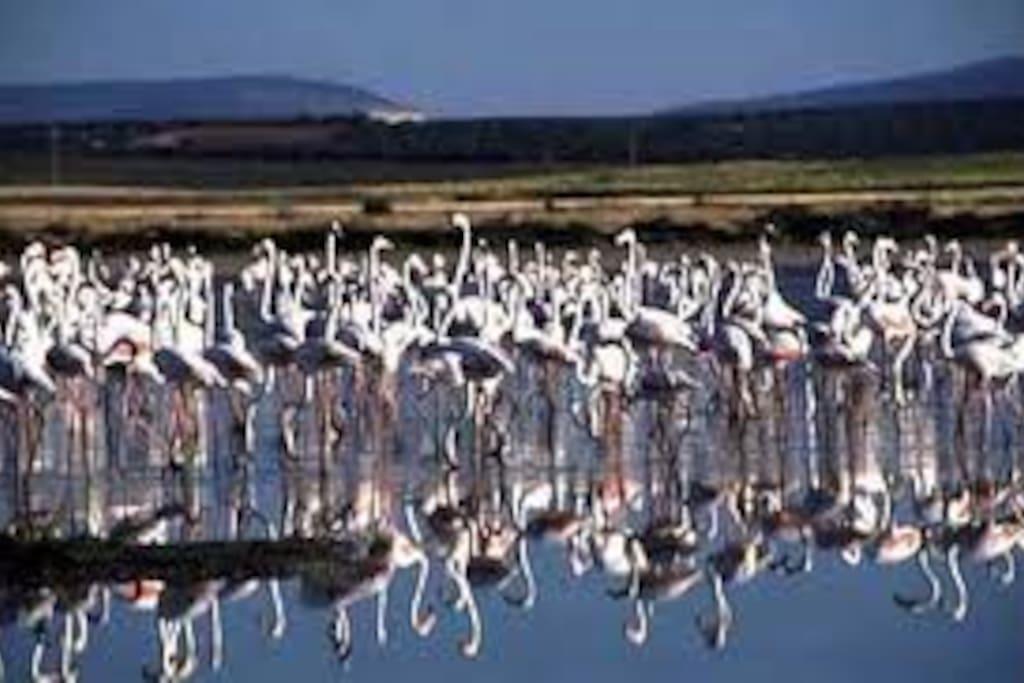 flamencos paseo a la laguna