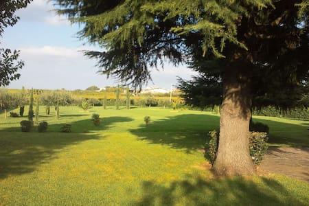 fantastic private room in a villa  - Ciampino