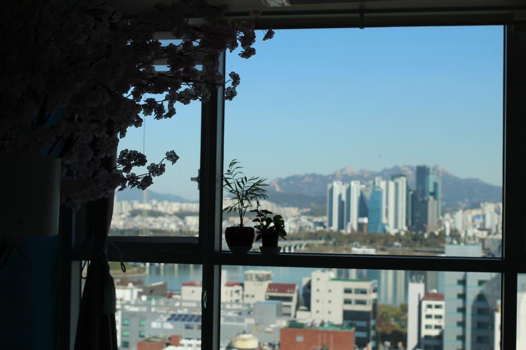 벚꽃나무/ 함께 보는 풀 윈도우 한강뷰 + 넓은 스튜디오 ...