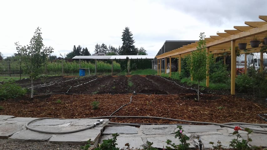 View of the vegetable gardens and vineyard from the new deck.
