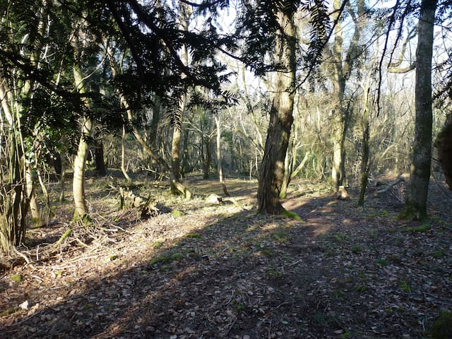 Secret Wood  Wild Camping
