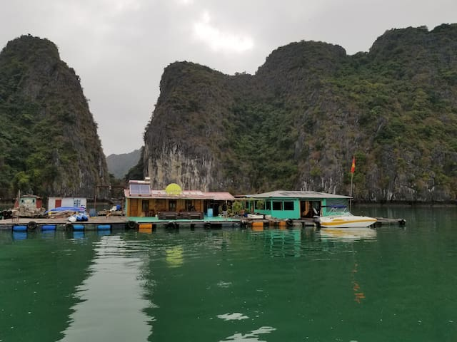 Floating homestay with  free Kayak,  plankton.